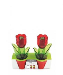 Poza Solnita Tulipa